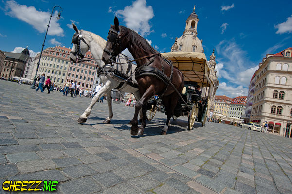 Экскурсия на лошадях в Дрездене