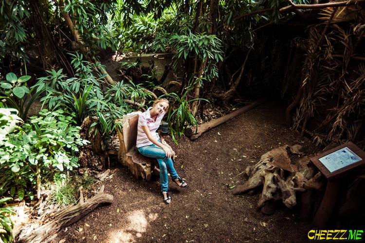 Пражский зоопарк - настоящие джунгли