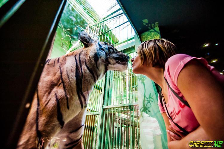 Пражский зоопарк - экскурсия в Чехии