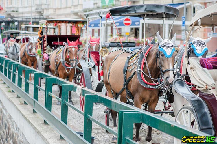Карловы Вары - прогулка на лошадях