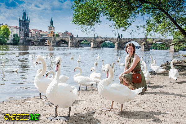 Прогулка по Праге лебеди на набережной