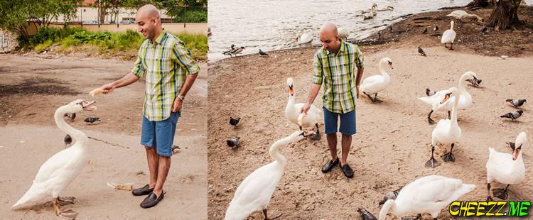 Лебеди в Праге - индивидуальная экскурсия и фотосессия