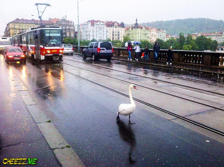 Наводнение в Праге - угроза всем жителям пражского зоопарка