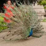 Романтические сады в Праге