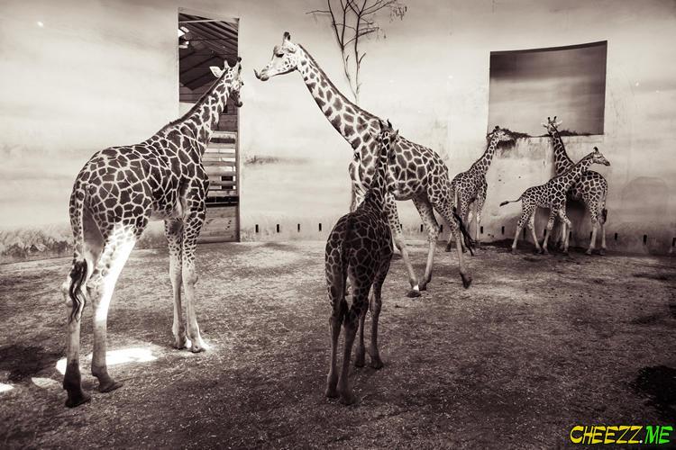 Zoo in  Prague photo